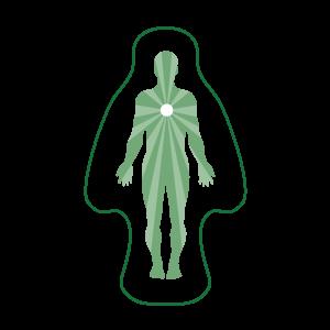 La Chlorella régule le transit intestinal