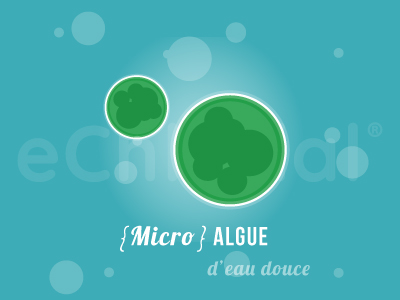 Chlorella, micro algue d'eau douce