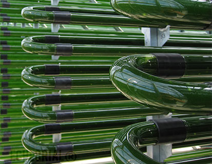 Chlorella Glass Tubes
