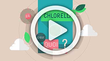 Video : Chlorella, What is it ?