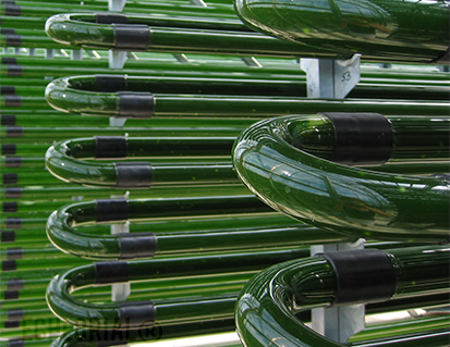 Ultra pure chlorella eChlorial cultivated in glass tubes