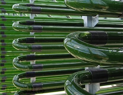 Micro algues cultivées sous tube de verre en Europe
