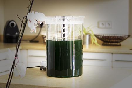 La phytotière, pour cultiver sa spiruline fraîche à la maison!