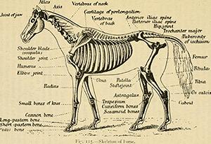 Naturopathie pour chevaux
