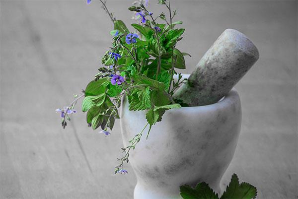 Le pouvoir des plantes reconnu
