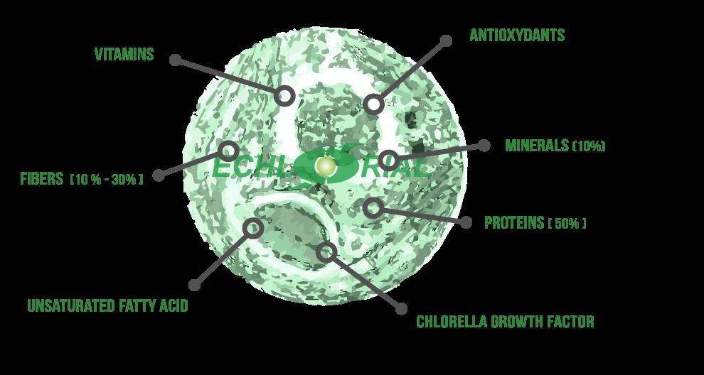 Chlorella Echlorial Composition