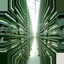 Chlorella Echlorial cultive en tube de verre