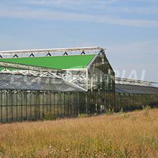 Chlorella Echlorial cultivee sous tube de verre en Allemagne